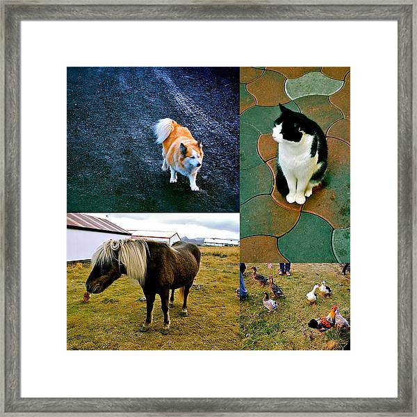 Framed Print featuring the photograph Animal Farm by HweeYen Ong