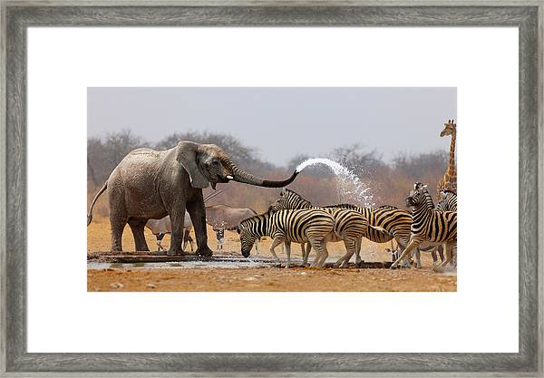 Animal Humour Framed Print