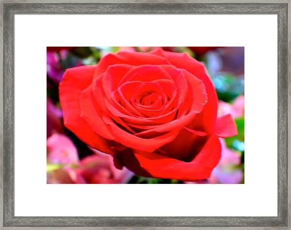 Anniversary Rose Framed Print
