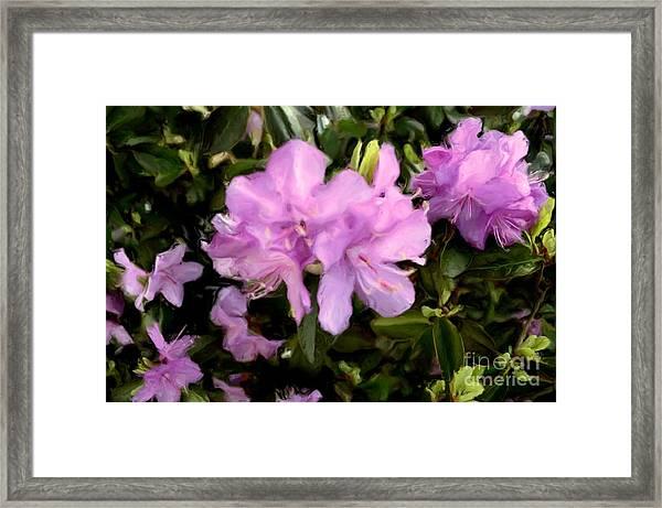 Announcing Spring Framed Print