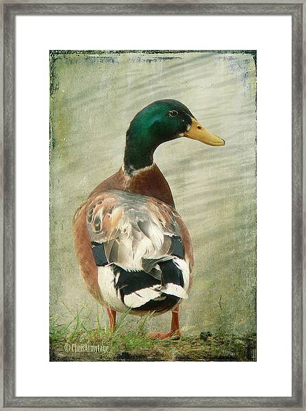 Another Duck ... Framed Print