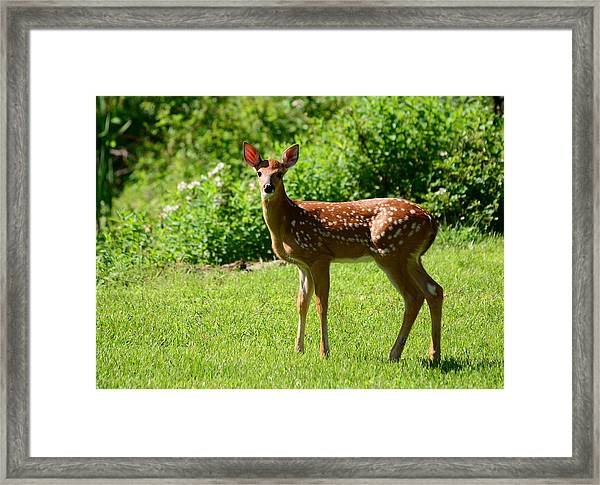 Another Reason To Love Spring Framed Print