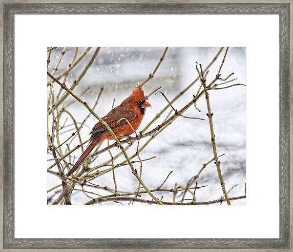 Another Snowy Day Framed Print