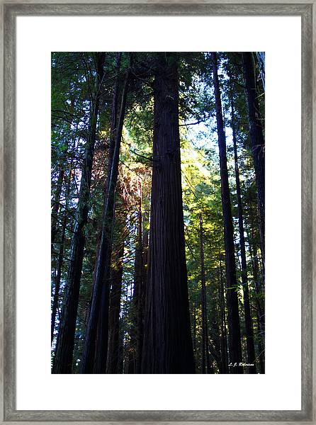 Another World Below The Trees Framed Print