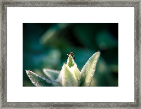 Ant No Thing To Fight About... There's Plenty Of Light Framed Print