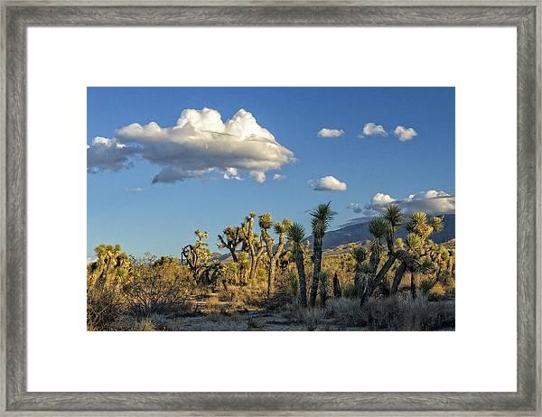 Antelope Valley Joshua Trees 2 Framed Print