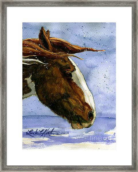 Apache Bachelor Stallion Of Sand Wash Basin Framed Print