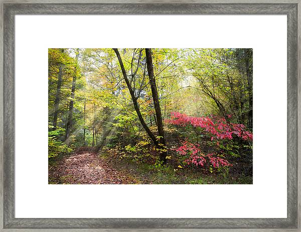 Appalachian Mountain Trail Framed Print