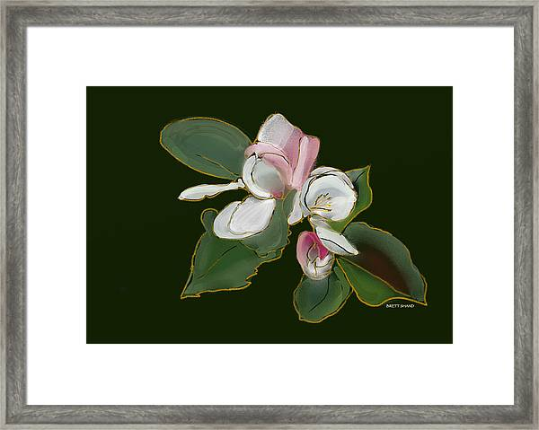 Apple Blossom Framed Print