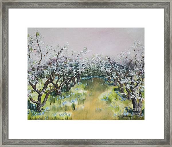 Apple Blossoms In Ellijay -apple Trees - Blooming Framed Print