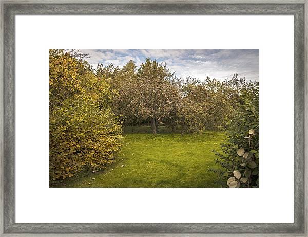 Apple Orchard Framed Print