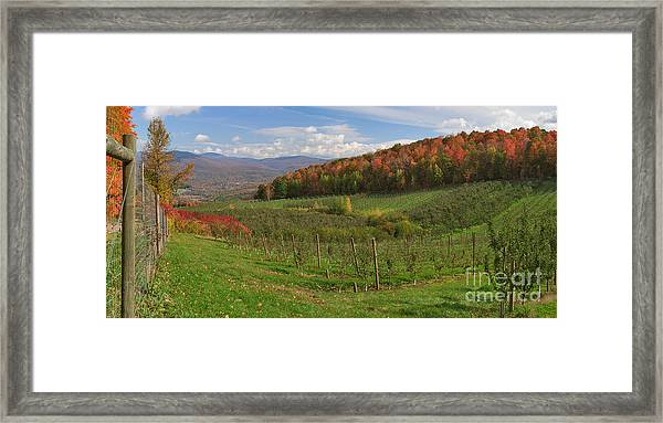 Apple Orchard Panorama Framed Print