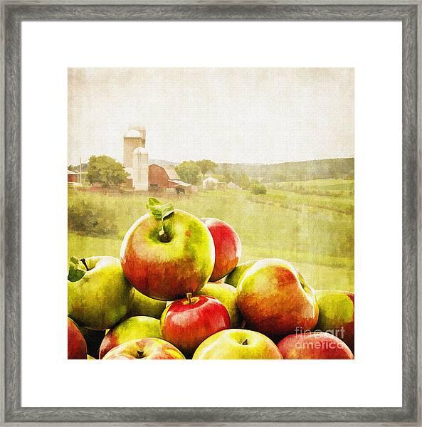 Apple Picking Time Framed Print