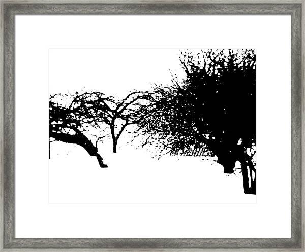 Apple Trees Framed Print
