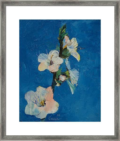 Apricot Blossom Framed Print