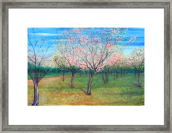 Apricot Orchard Framed Print