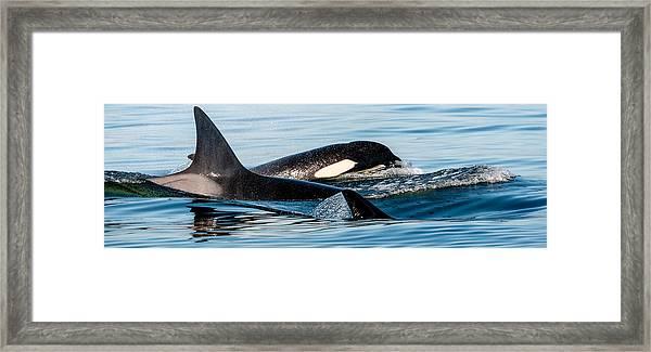 Aquatic Immersion Framed Print