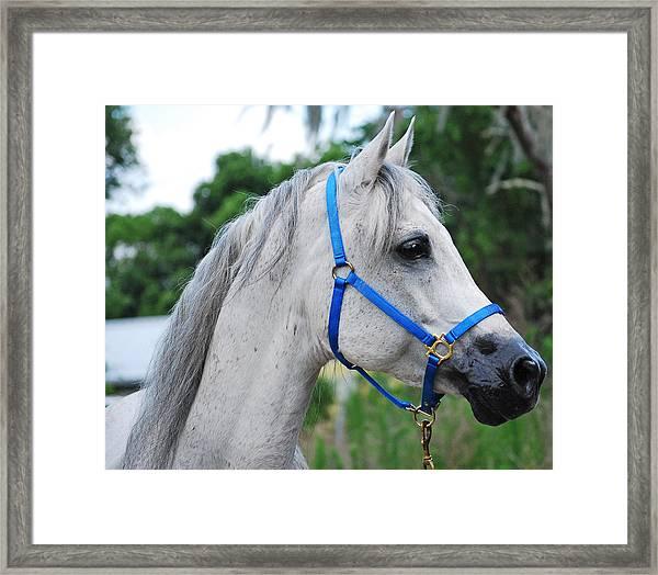 Arabian Framed Print