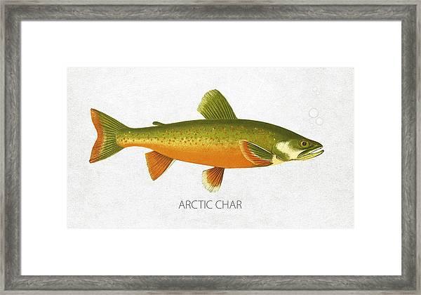 Arctic Char Framed Print