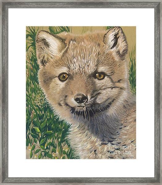 Sold Arctic Fox Framed Print