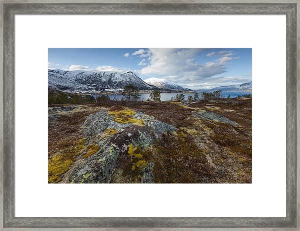 Arctic Lichen Framed Print
