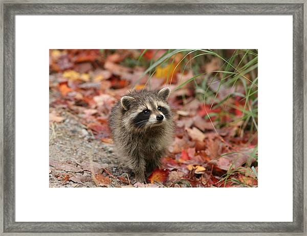 Are You My Mother Framed Print