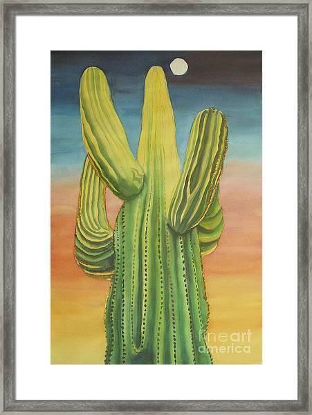 Arizona Cactus Framed Print