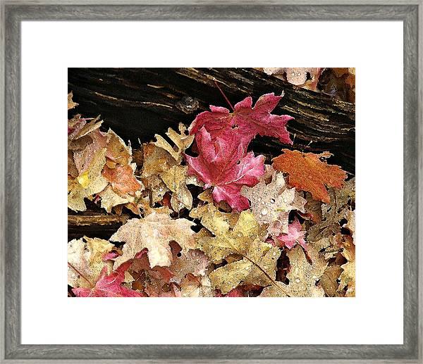 Arizona Fall Colors Framed Print