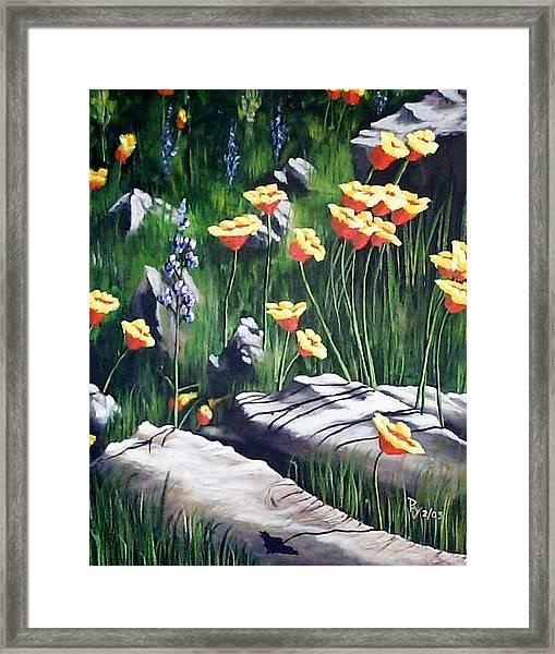 Arizona Poppies Framed Print