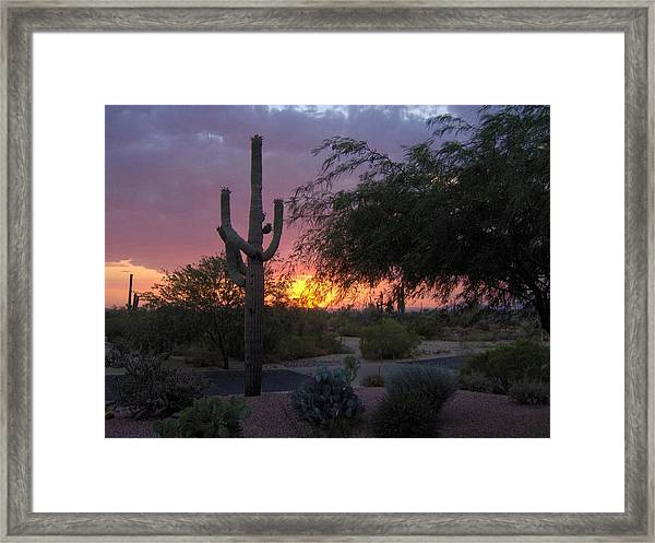 Arizona Sunset Framed Print by Catherine Swerediuk