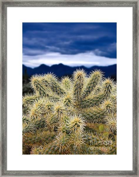 Arizona Teddy Bear Cactus Framed Print