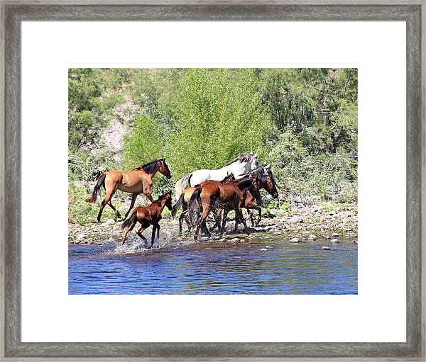 Arizona Wild Horse Family Framed Print