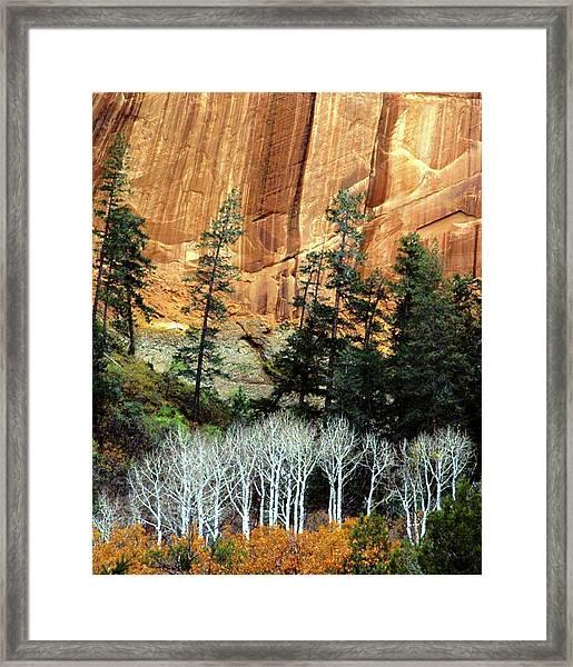Arizona's Betatkin Aspens Framed Print
