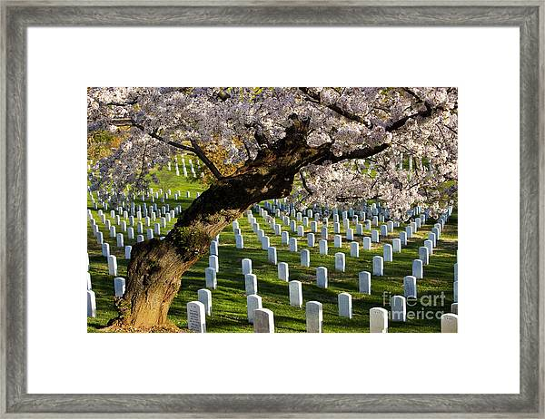 Framed Print featuring the photograph Arlington National Cemetary by Brian Jannsen