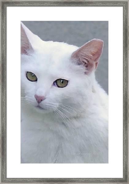 Art Cat Framed Print
