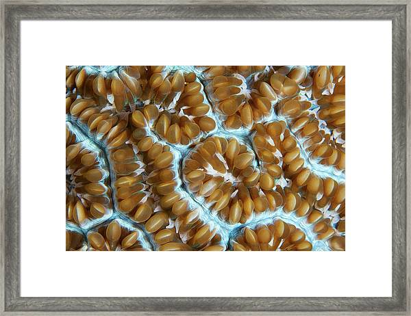 Art Of Corals Framed Print
