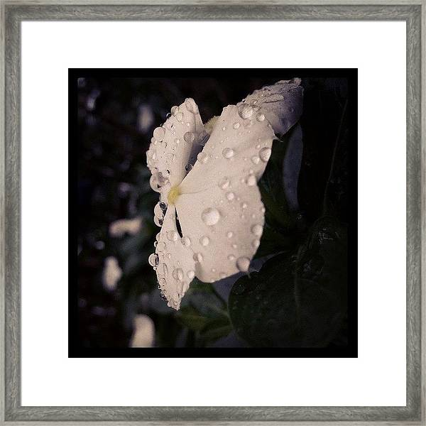 Art Of Nature Framed Print
