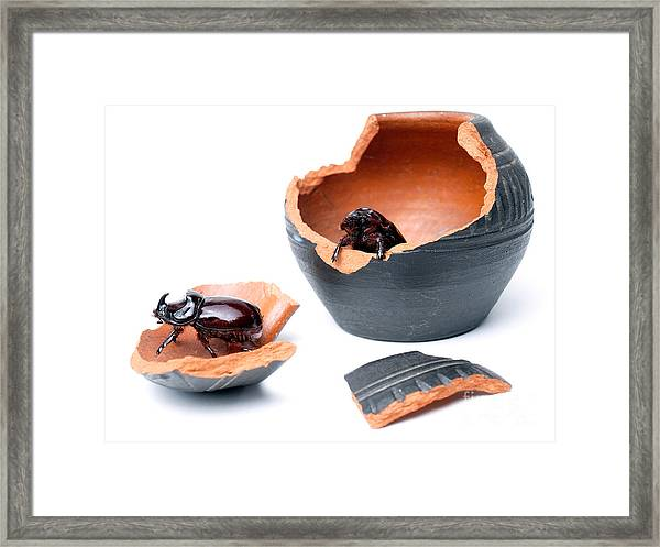 Artifacts And Scarabs Framed Print