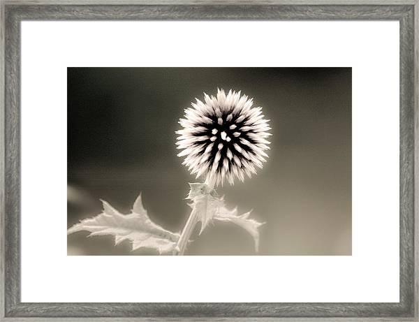 Artistic Black And White Flower Framed Print
