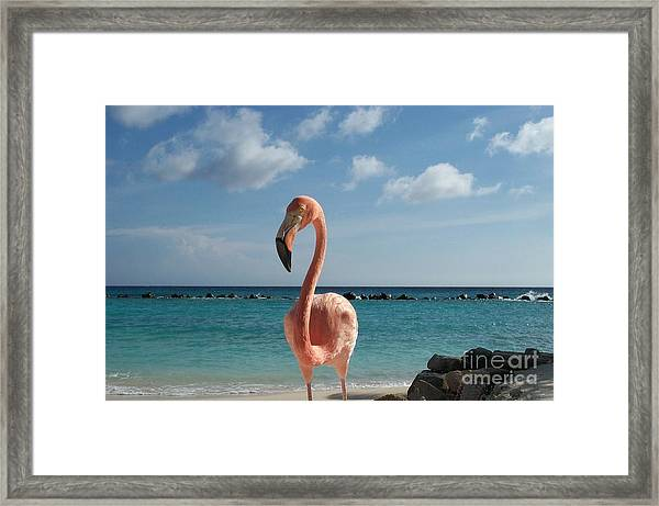 Aruba Hairy Eyeball Framed Print