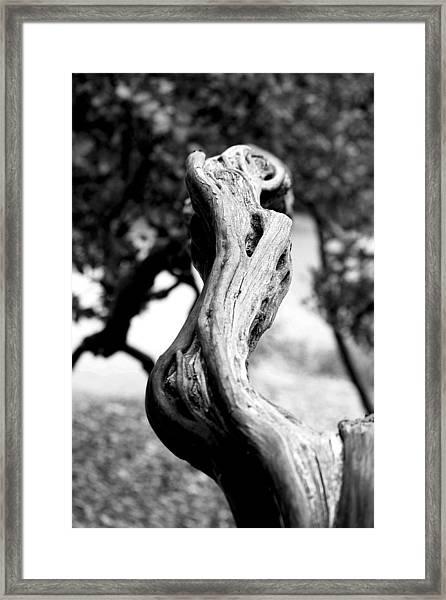 Ascending Branch Framed Print by Luna Curran