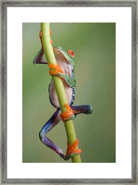 Ascending Framed Print