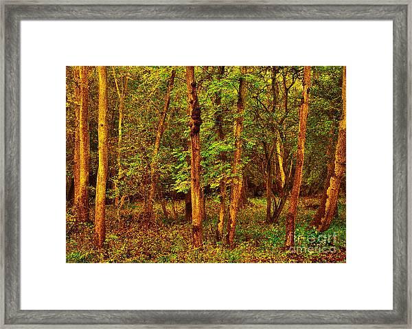 Ash Trees Framed Print
