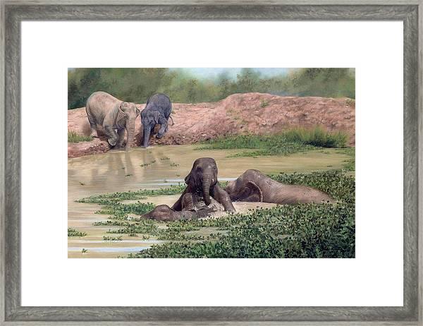 Asian Elephants - In Support Of Boon Lott's Elephant Sanctuary Framed Print