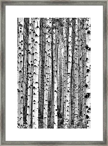 Aspen Boles Framed Print