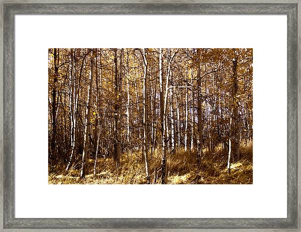 Framed Print featuring the photograph Aspen Grove In Lake Tahoe by William Havle