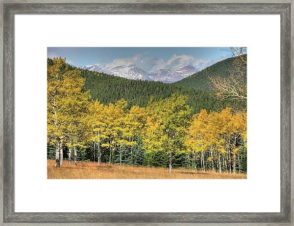 Aspen In Fall Mt Evans Framed Print