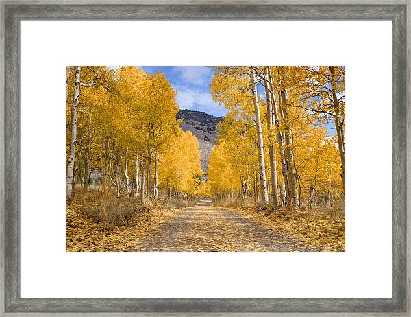 Framed Print featuring the photograph Aspen Lane Wide Crop by Priya Ghose