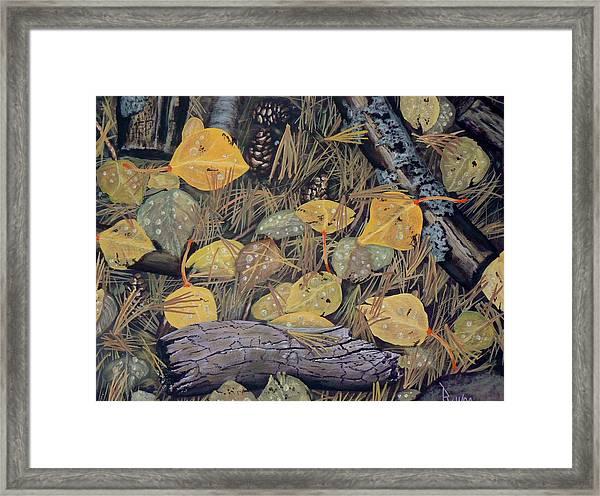 Aspen Leaves And Needles Framed Print