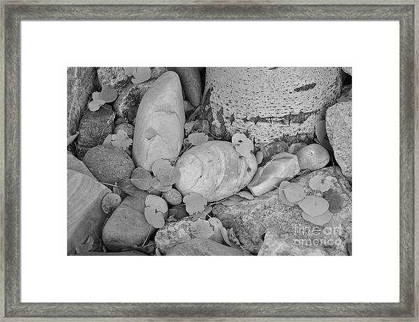 Aspen Leaves On The Rocks - Black And White Framed Print